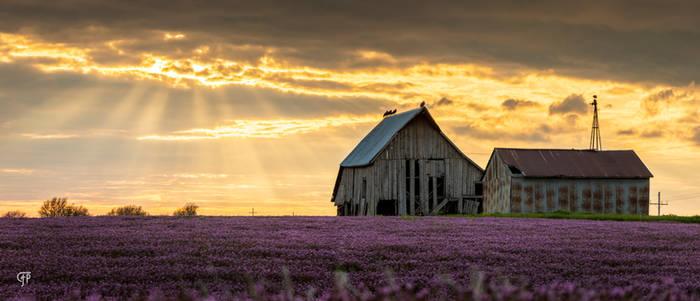 Midwestern Spring