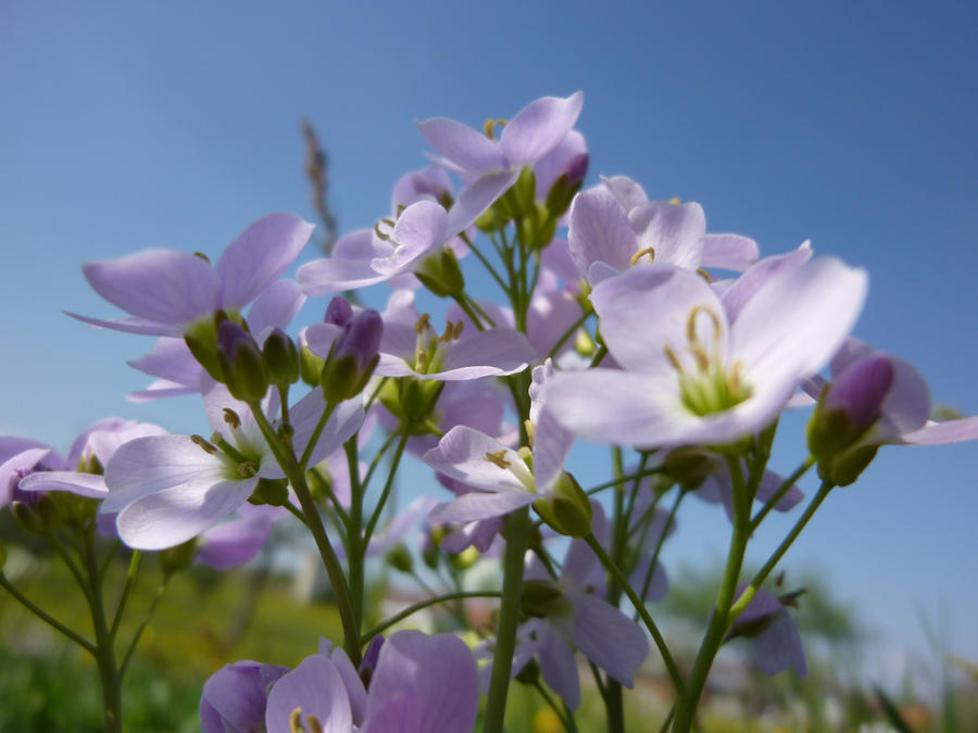 Flower #9 by Werfisch