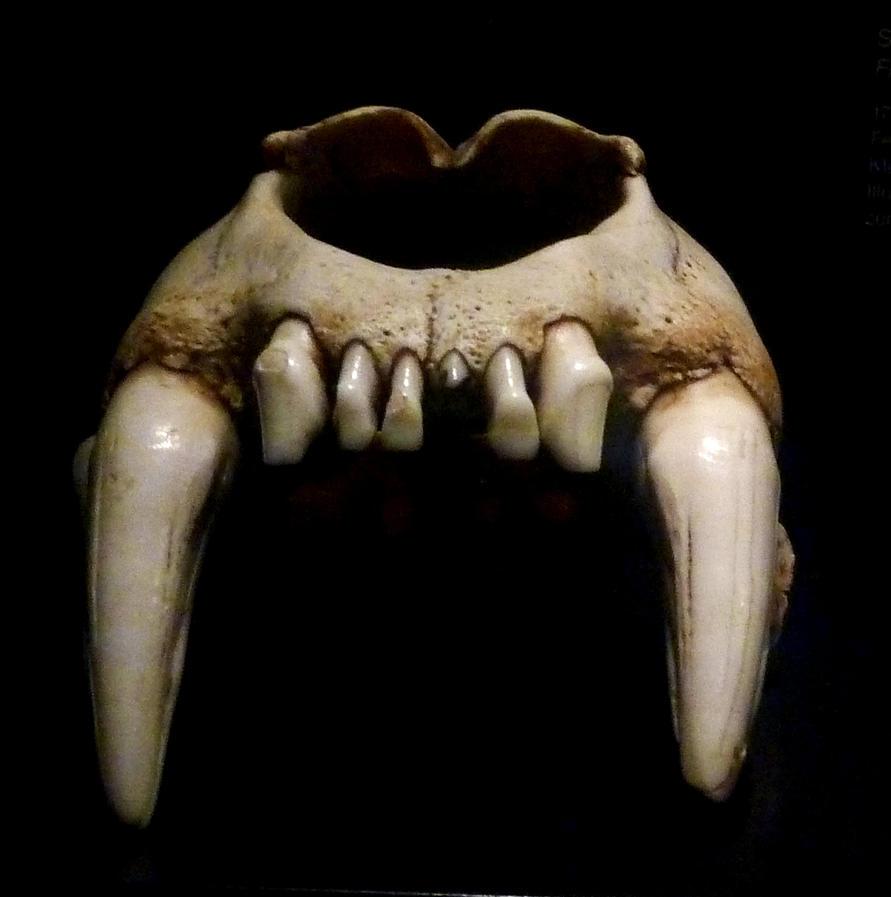Image Gallery Lion Teeth