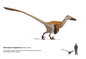 Velociraptor mongoliensis by DELIRIO88