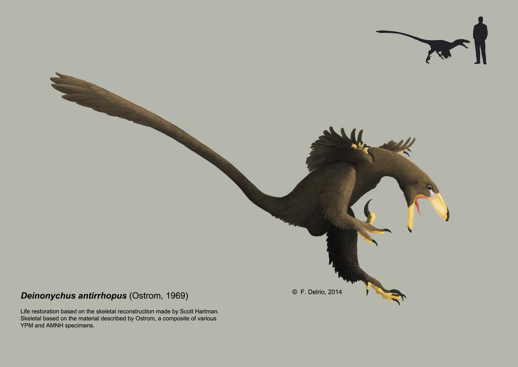 Deinonychus antirrhopus 2014 by DELIRIO88