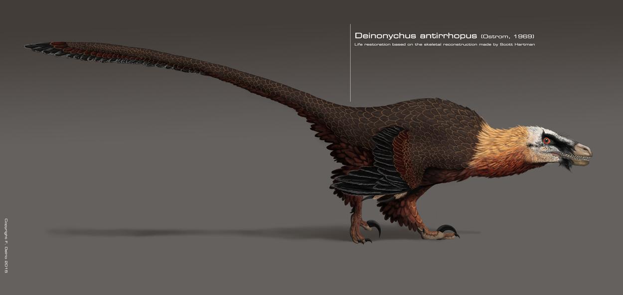 Deinonychus antirrhopus 2015 by DELIRIO88 on DeviantArt