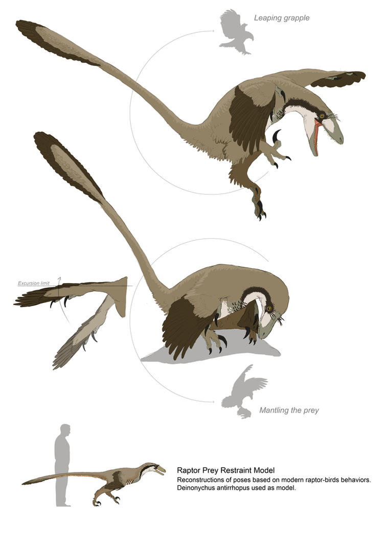 Paravians Studies Raptor Prey Restraint Model By