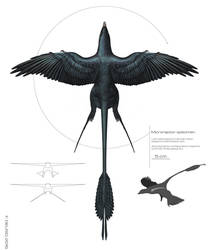 Microraptor specimen 2016