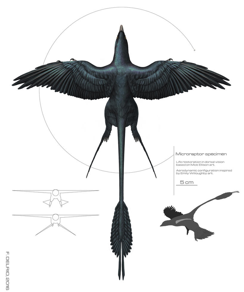 Microraptor specimen 2016 by DELIRIO88