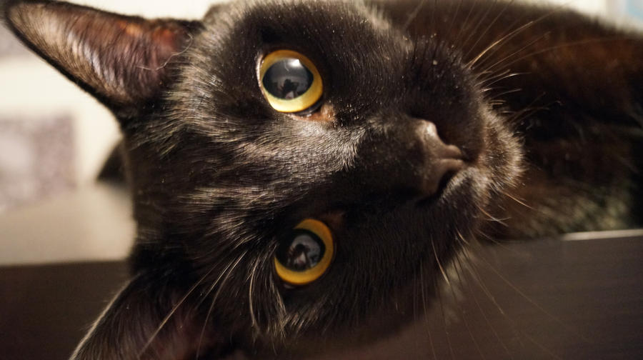 Taki and his big eyes by Kusco
