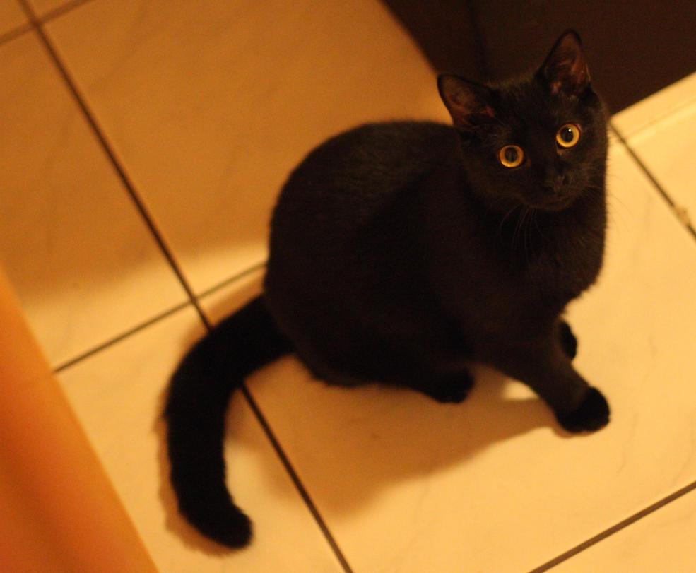 Leia black little princess by Kusco
