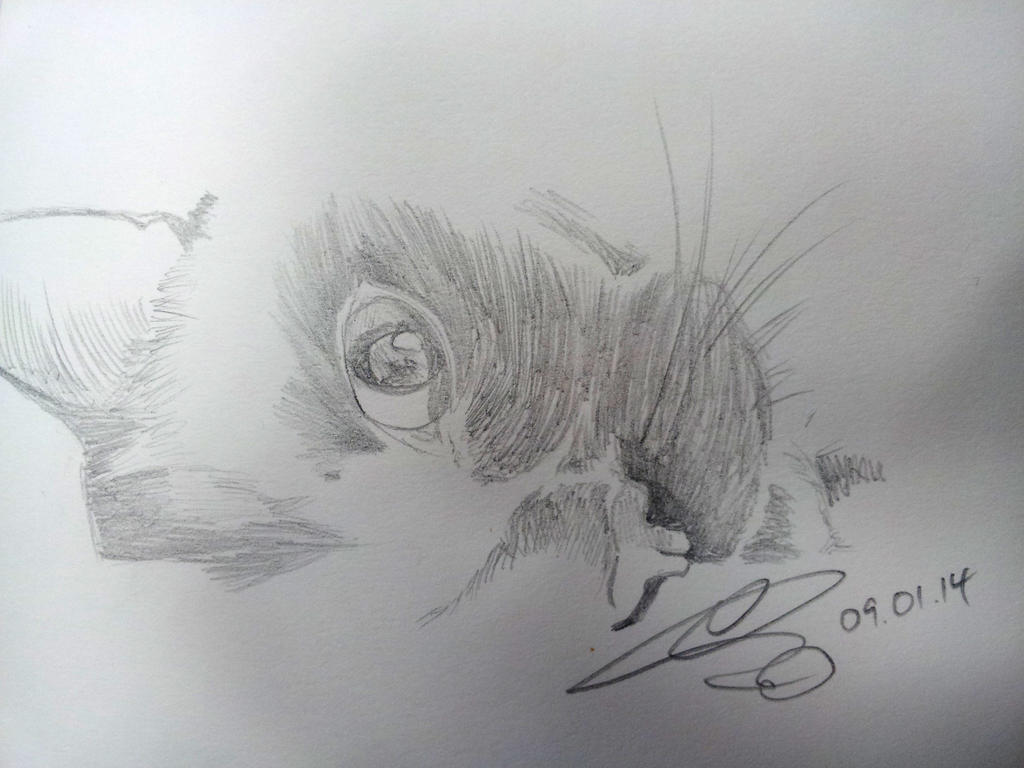 Taki study by Kusco