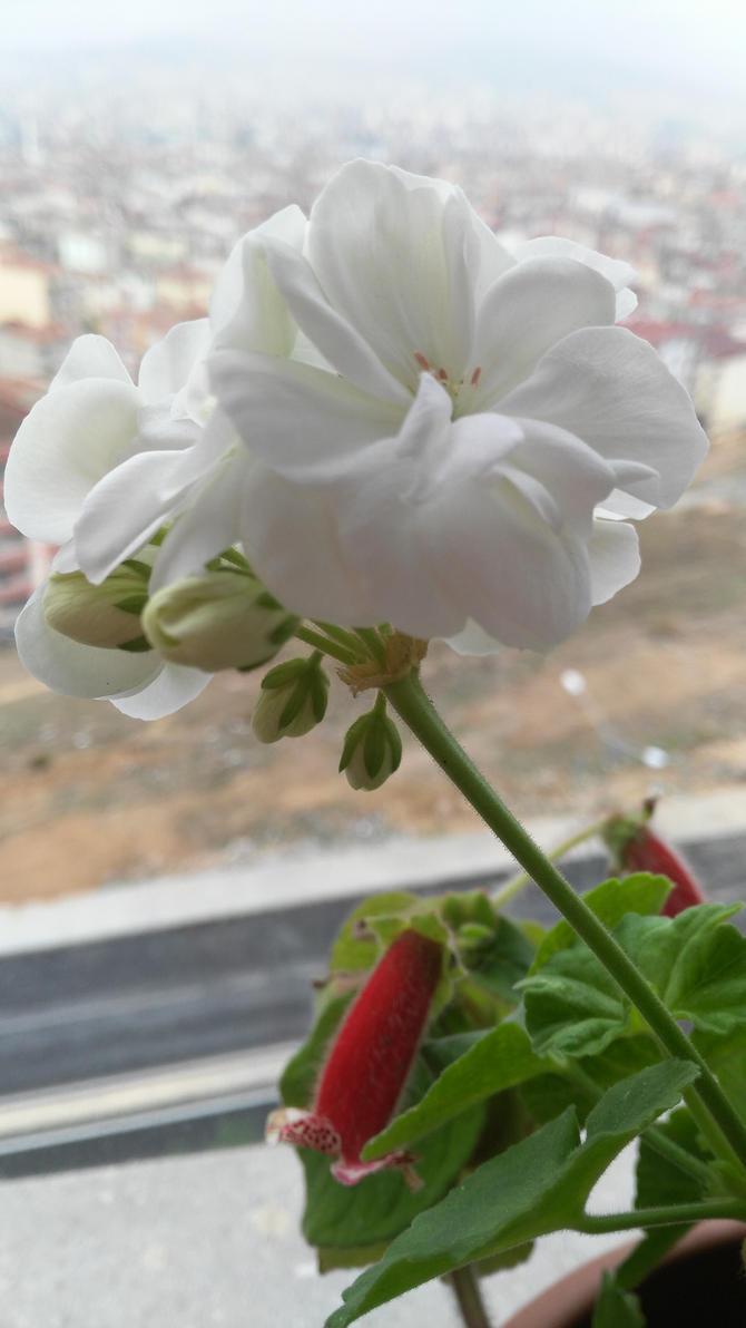 Flowers By Lilyamsen On Deviantart