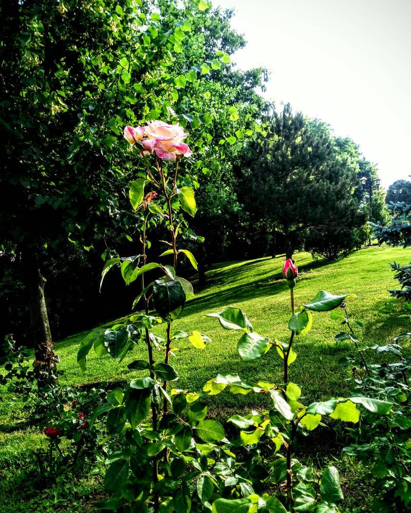 nature by lilyamsen