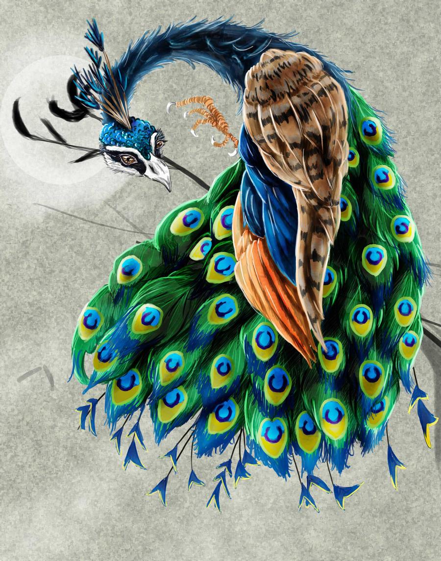 Peacock Colorful By Amalgem On Deviantart