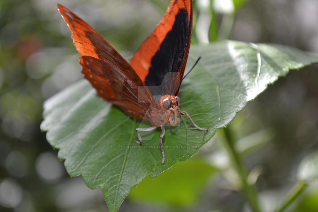 Butterfly by SnapshotsbySarah