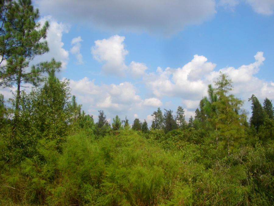 The Florida Skyline by hosmer23