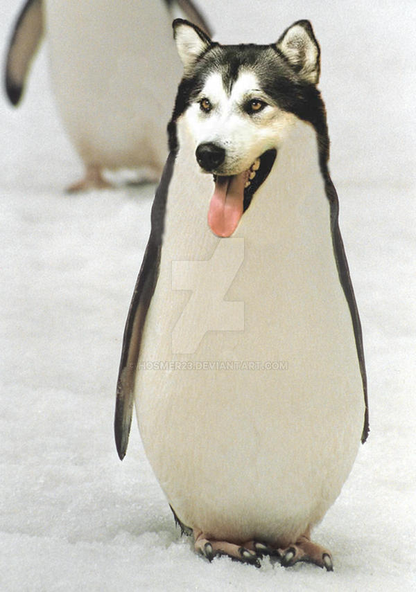 Malamute Penguin by hosmer23