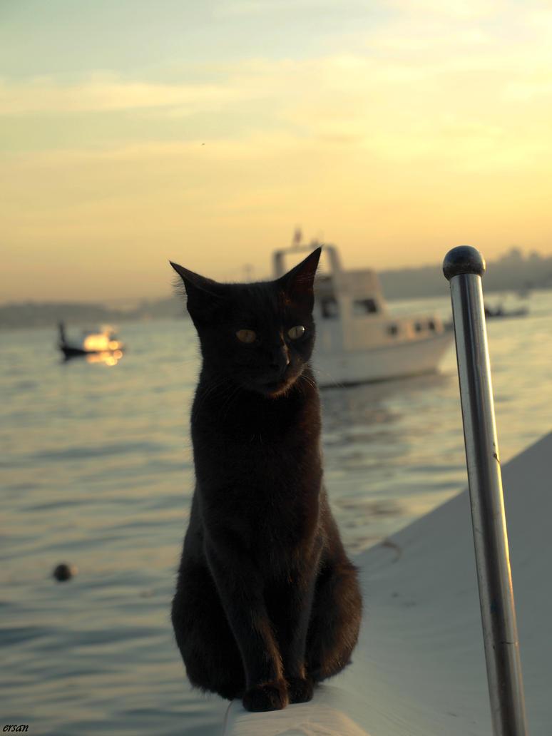 sailor by epatlis