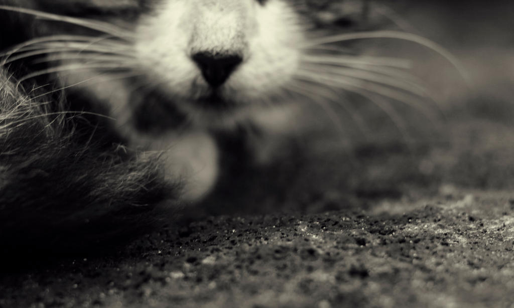 Sniff by Linnette