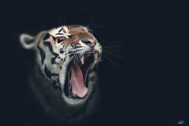 -Tiger-