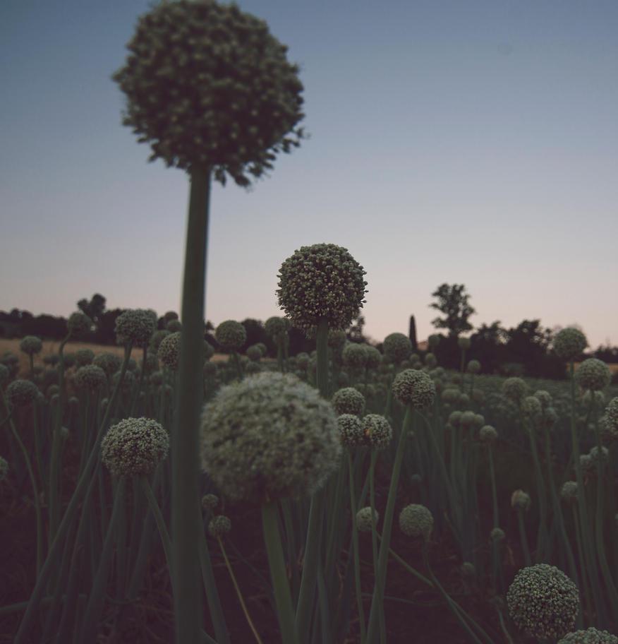 Spheres by VonStarck