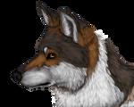 Mexican Wolf - Speedpaint