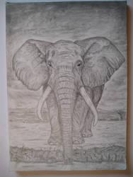 Elephant by jeanettk