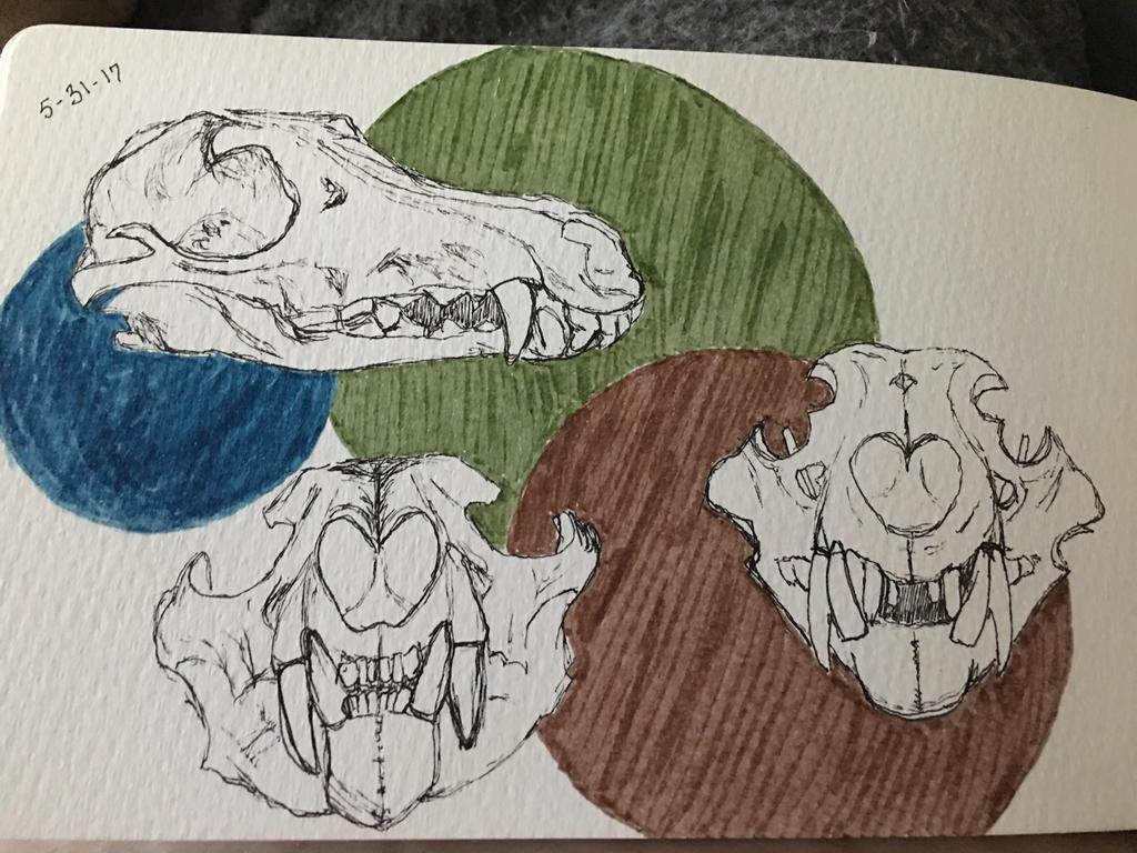 Wolf and lion skulls (skull anatomy) by SlvrDrksng on DeviantArt