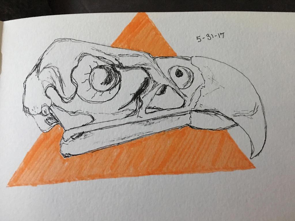 Bird skull (skull anatomy) by SlvrDrksng on DeviantArt