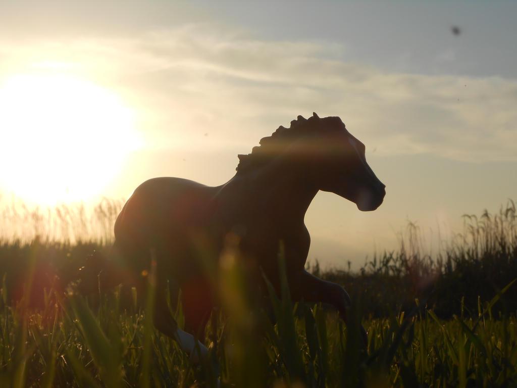 Sundown by creativecause