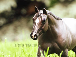 Enchanted by creativecause