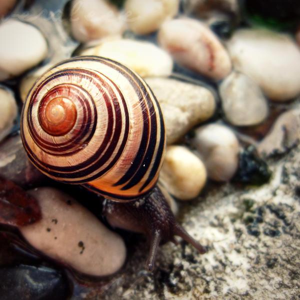 hypnotize. by veraleee