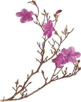 Pink Flower PNG by desperatedeceit