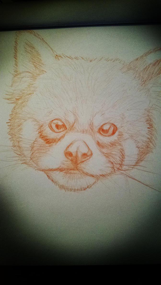 Croquis Panda Roux by 2TailZ9