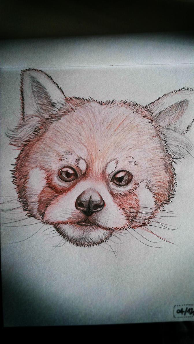 Panda Roux 2 by 2TailZ9