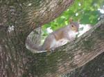 My squirrel friend 2