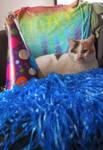 Cookie the Birthday Cat