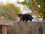 Cat of fence