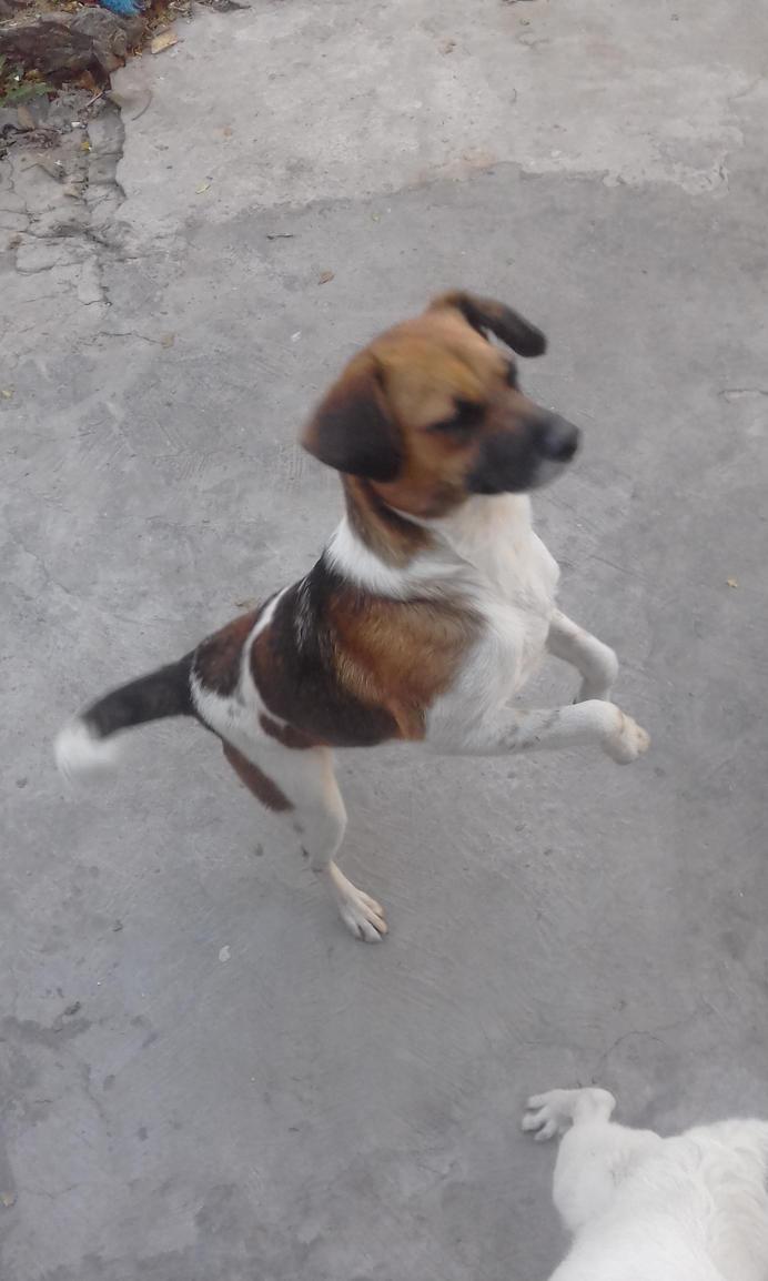 My dog standing (03/05) by YonathanLagrutta