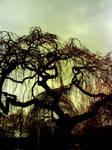 Gloom by Helen-Of-The-Dead