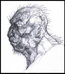 Cactacae Head Study
