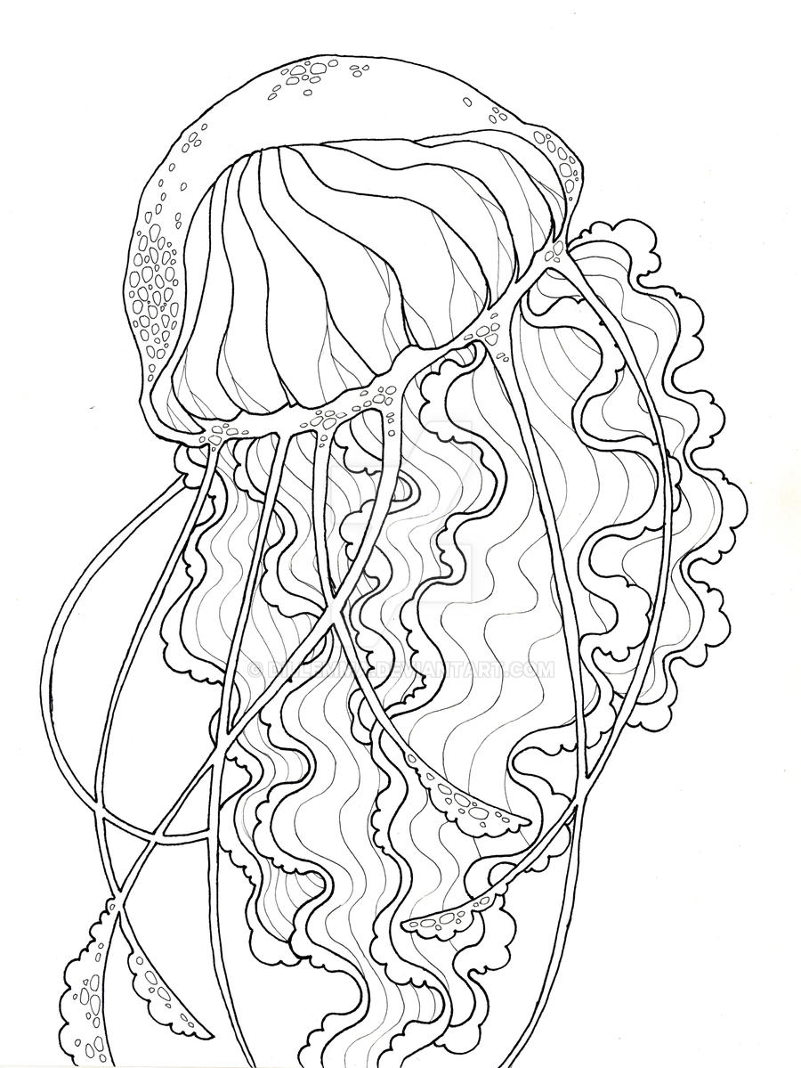 Jellyfish Line Art : Jellyfish by dillemma on deviantart