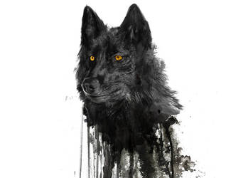 Wolf by PhotoLife512