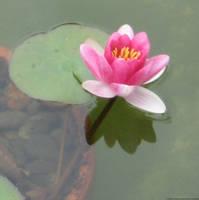 Lotus by Ariketh
