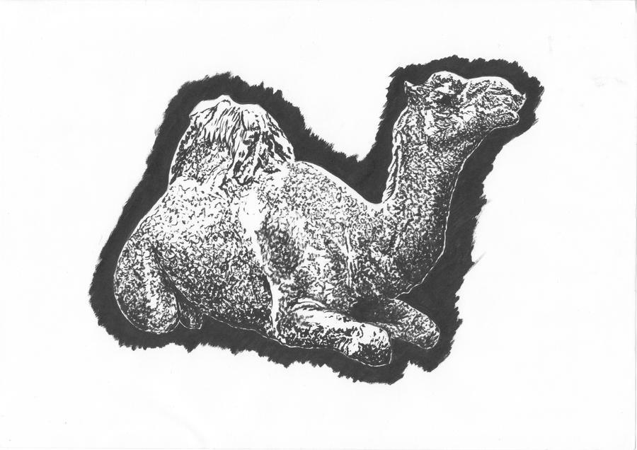 Camel, sitting by LeilaBattison