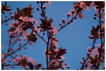 Spring is comming