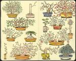 Basic Bonsai