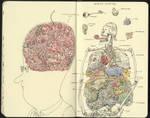 Artist anatomy
