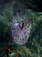 Spiderweb by positively