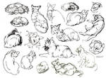 Cat sketches by Moldovorot