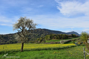 Paysage Printanier du Nord Vaudois
