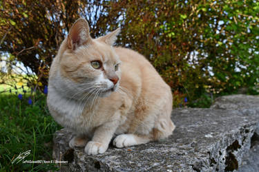 Mon Chat by LePtitSuisse1912