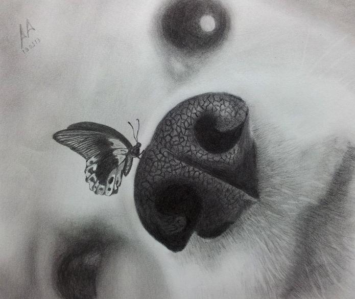 Dreams by Pandaforge